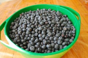 15 kg de bleuets frais cueiilis